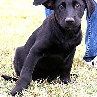 Adopt A Pet :: Dingo~ meet me~ - Glastonbury, CT