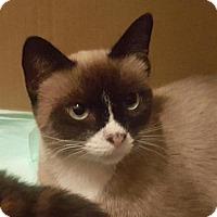 Adopt A Pet :: Coraline - Austin, TX