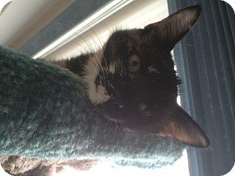 Domestic Mediumhair Kitten for adoption in Burlington, Ontario - Thelma