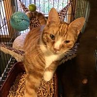 Adopt A Pet :: Rudy - Bedford Hills, NY