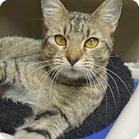 Adopt A Pet :: Georgette - Germantown, TN