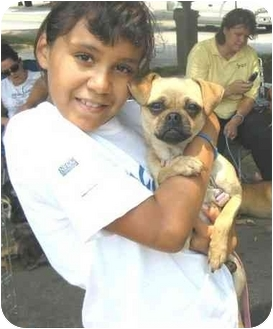 Pug/Whippet Mix Dog for adoption in ATLANTA, Georgia - Yoda