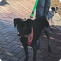 Adopt A Pet :: Clipper - Willingboro, NJ
