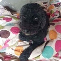 Adopt A Pet :: ZAK - Mesa, AZ