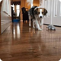Adopt A Pet :: Rosco - Newport, KY