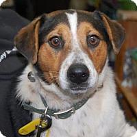 Adopt A Pet :: Prissy - Brooklyn, NY