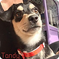 Adopt A Pet :: Tandy - Island Heights, NJ