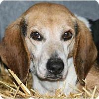 Adopt A Pet :: Alex-IN MAINE - kennebunkport, ME
