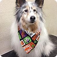 Adopt A Pet :: Rocky II - Mission, KS