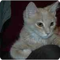 Adopt A Pet :: Beamer - Arlington, VA