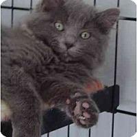 Adopt A Pet :: Serafina - Modesto, CA