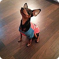 Adopt A Pet :: Beemer - Hazard, KY