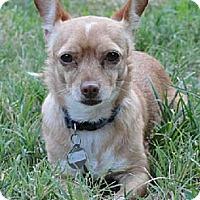 Adopt A Pet :: JOELEEN - Fresno, CA