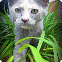 Adopt A Pet :: Gwen - Gadsden, AL