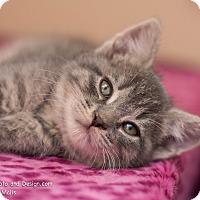 Adopt A Pet :: Kelsey - Fountain Hills, AZ