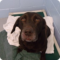 Adopt A Pet :: Bianca - Muskegon, MI