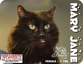 Domestic Shorthair Cat for adoption in Davenport, Iowa - Mary Jane