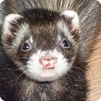 Adopt A Pet :: Merky - Fawn Grove, PA