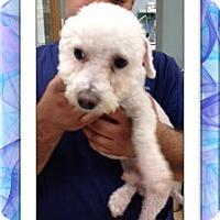 Adopt A Pet :: Adopted!!Bradley - IL - Tulsa, OK
