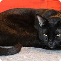 Adopt A Pet :: Sheldon - Alexandria, VA