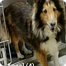 Adopt A Pet :: Angel # 4