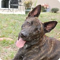 Adopt A Pet :: Danka - Ormond Beach, FL