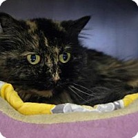 Adopt A Pet :: Dora - New Milford, CT
