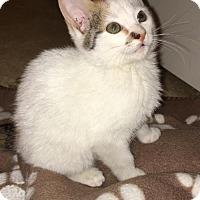 Adopt A Pet :: Lyla 160571 - Atlanta, GA