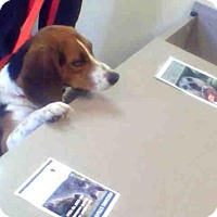Adopt A Pet :: A594226 - Louisville, KY