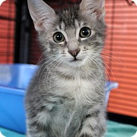 Adopt A Pet :: Comfy - Sarasota, FL