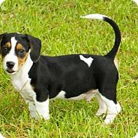 Adopt A Pet :: Rover w/video - Alvin, TX