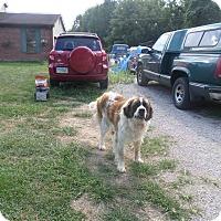 Adopt A Pet :: Sadie - Pataskala, OH