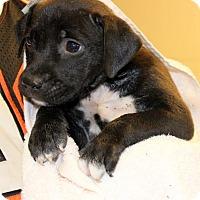 Adopt A Pet :: Bobbi - Philadelphia, PA