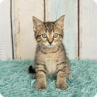 Adopt A Pet :: Monkey - Columbia, IL