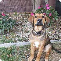Adopt A Pet :: MOCHA - Winnipeg, MB