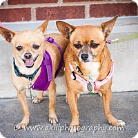 Adopt A Pet :: Khloe and Niyah - Dallas, TX