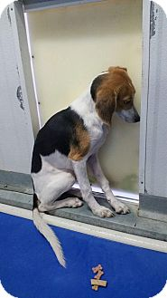 Hound (Unknown Type)/Beagle Mix Dog for adoption in Gulfport, Mississippi - Bessie