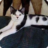 Adopt A Pet :: Domino - New Castle, PA