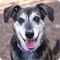 Adopt A Pet :: ZOE - Kyle, TX