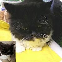 Adopt A Pet :: Oreo - Lakeland, FL