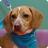 Adopt A Pet :: Stan - Evansville, IN