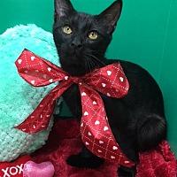 Adopt A Pet :: Rory - Pasadena, TX