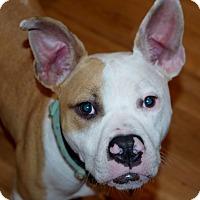 Adopt A Pet :: MICKEY - Milwaukee, WI