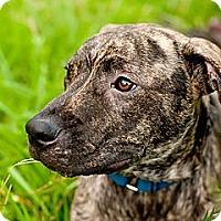 Adopt A Pet :: Deuce - Tallahassee, FL