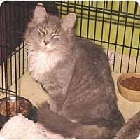 Adopt A Pet :: Bubilicous - Colmar, PA