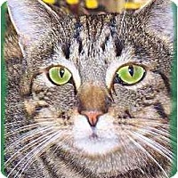Adopt A Pet :: Willow - Scottsdale, AZ