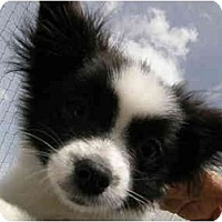 Adopt A Pet :: Gogo - Meridian, ID