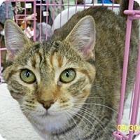 Adopt A Pet :: Freda D - Sacramento, CA