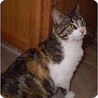 Adopt A Pet :: Cali - Jenkintown, PA