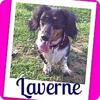 Adopt A Pet :: Laverne - Brazil, IN
